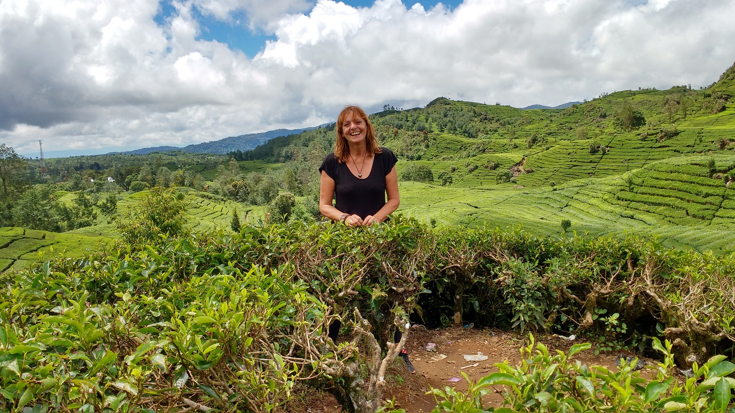 Jane Clements Life Coach standing in a tea plantation in Java
